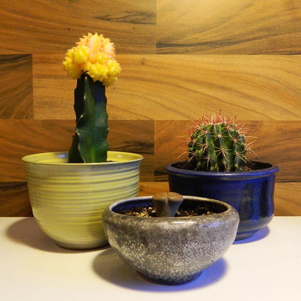 Keramik & Kaktus